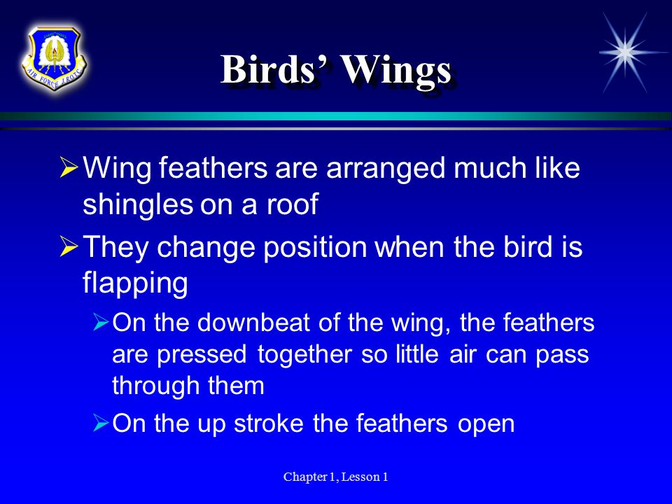 Birds' Wings Wing feathers are arranged much like shingles on a roof