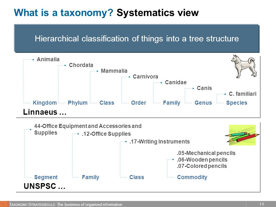 What is a taxonomy Systematics view