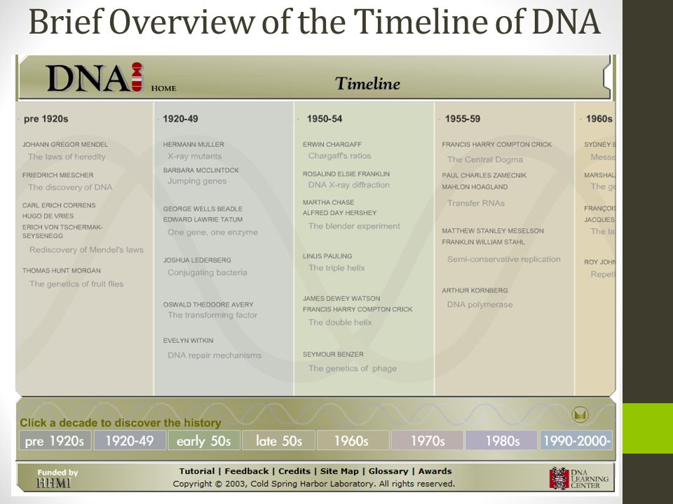 Brief Overview of the Timeline of DNA