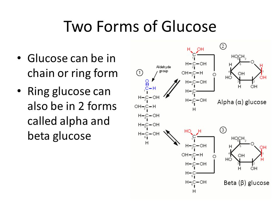 Two Forms of Glucose Glucose can be in chain or ring form