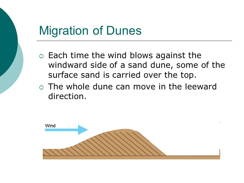 Migration of Dunes Each time the wind blows against the windward side of a sand dune, some of the surface sand is carried over the top.