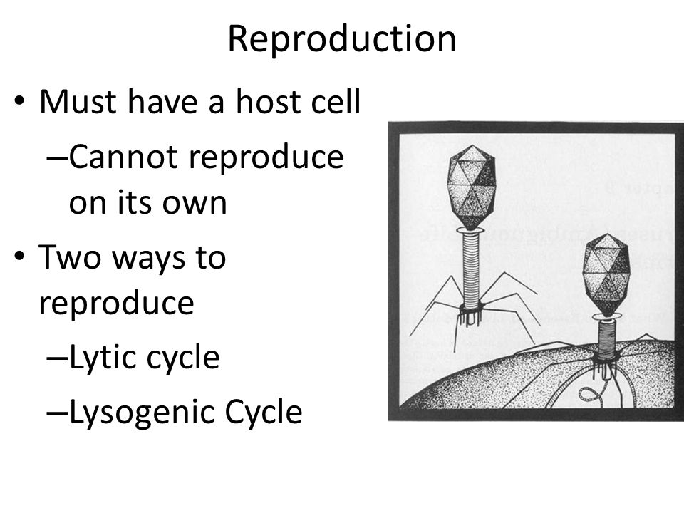 Reproduction Must have a host cell Cannot reproduce on its own