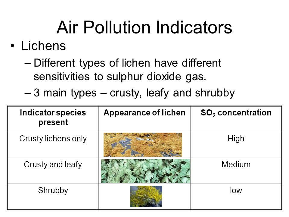 Image result for indicator species AIR pollution