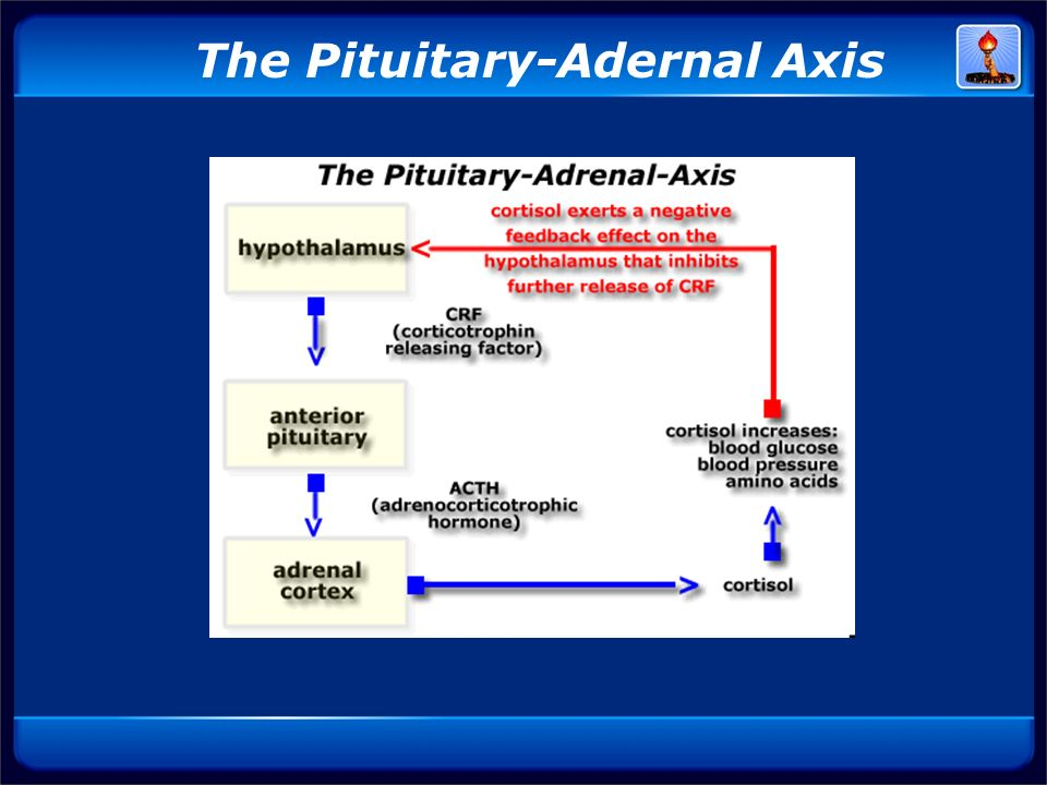 The Pituitary-Adernal Axis