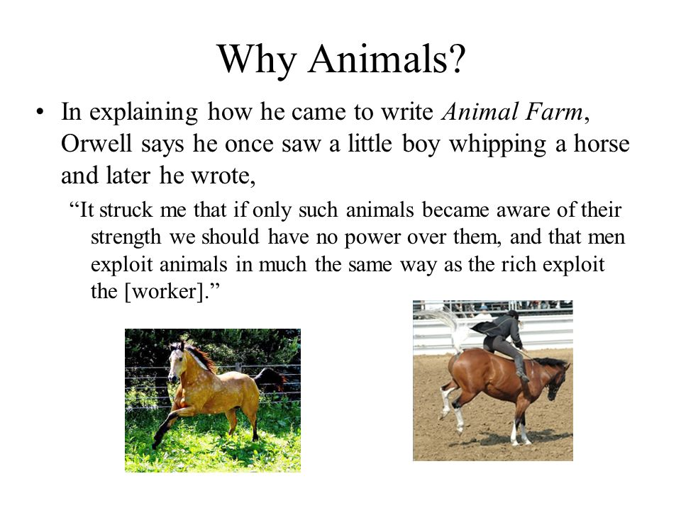 Why Animals In explaining how he came to write Animal Farm, Orwell says he once saw a little boy whipping a horse and later he wrote,