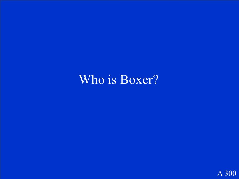 Who is Boxer A 300