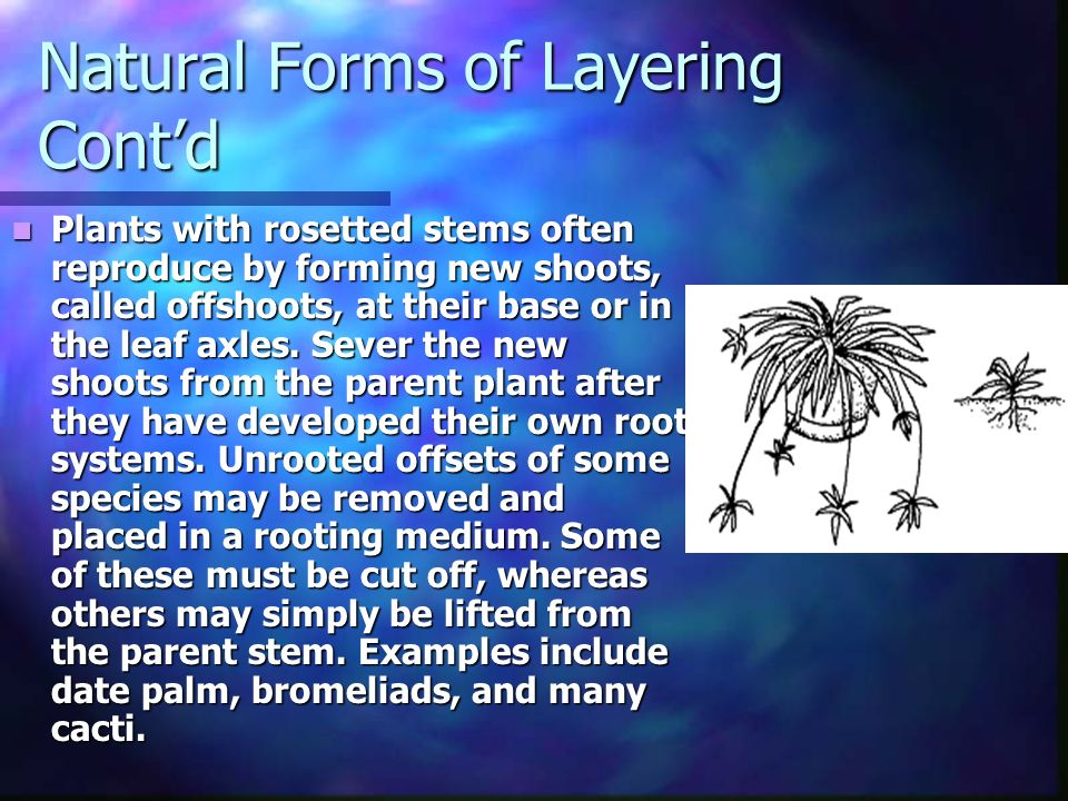 Natural Forms of Layering Cont'd