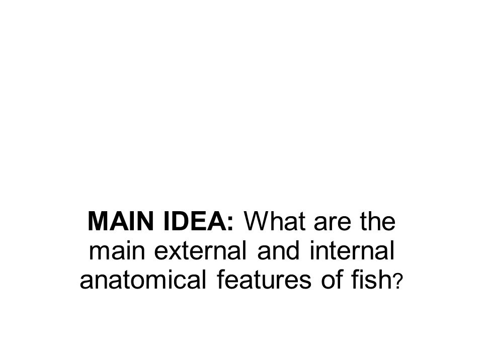 MAIN IDEA: What are the main external and internal anatomical features of fish
