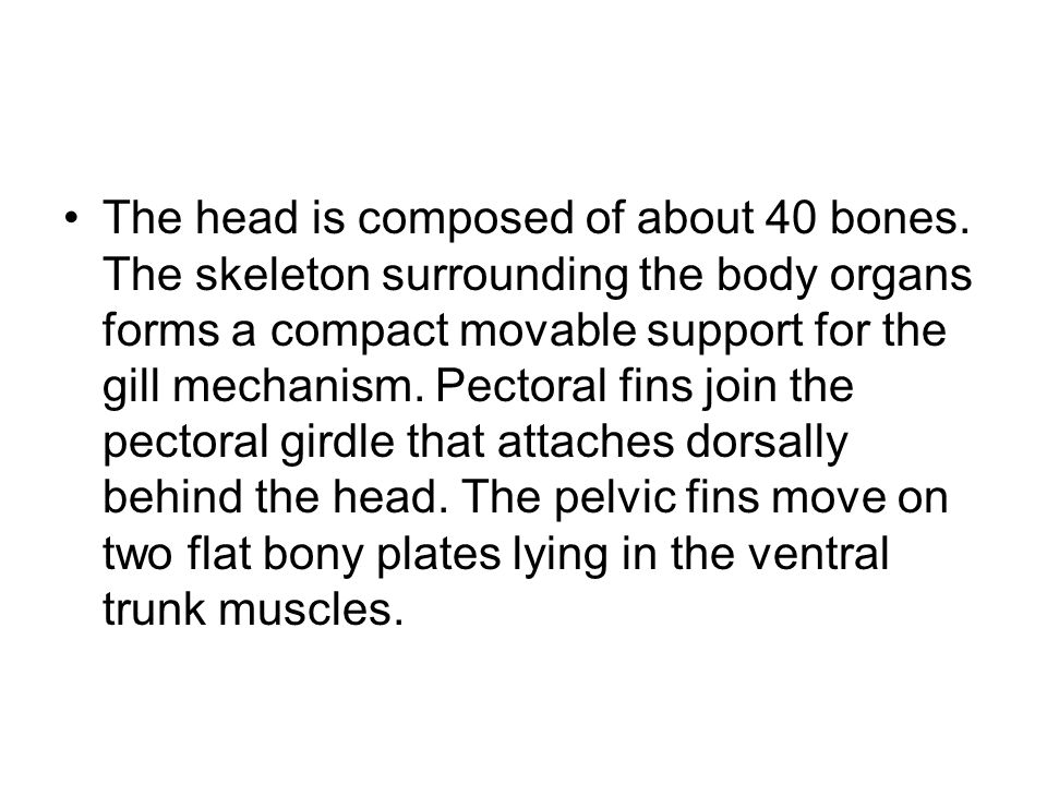 The head is composed of about 40 bones
