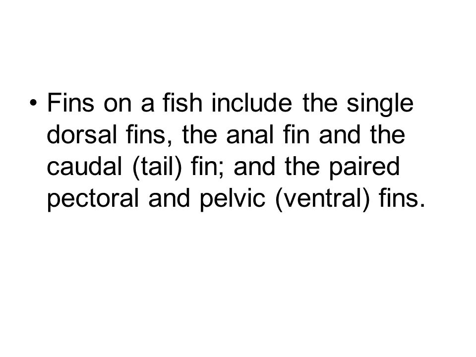 Fins on a fish include the single dorsal fins, the anal fin and the caudal (tail) fin; and the paired pectoral and pelvic (ventral) fins.