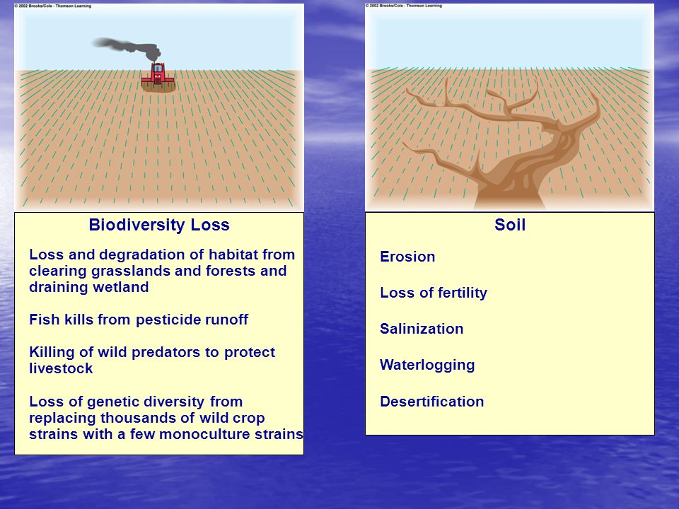 Biodiversity Loss Soil