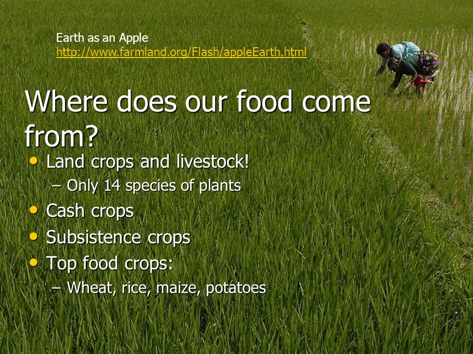 Where does our food come from
