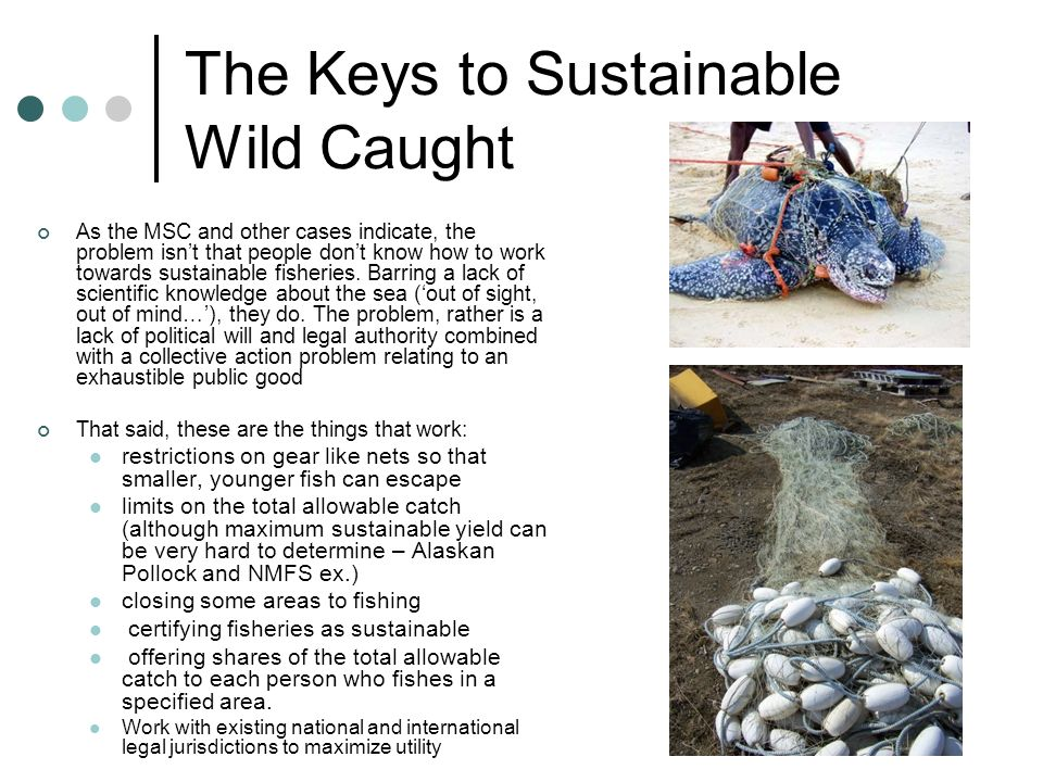 The Keys to Sustainable Wild Caught