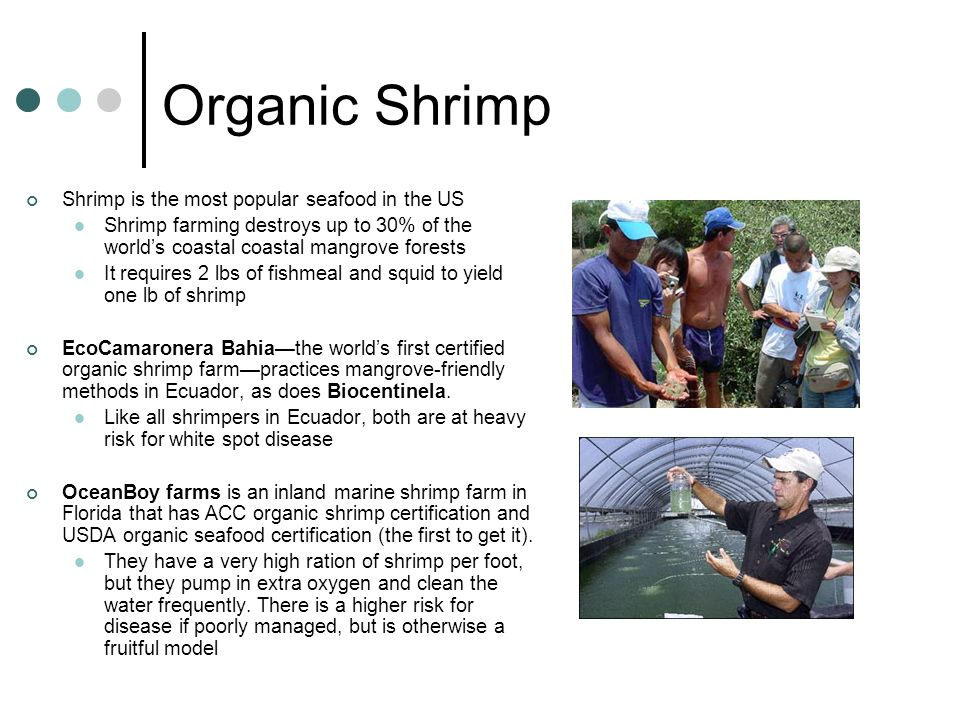 Organic Shrimp Shrimp is the most popular seafood in the US