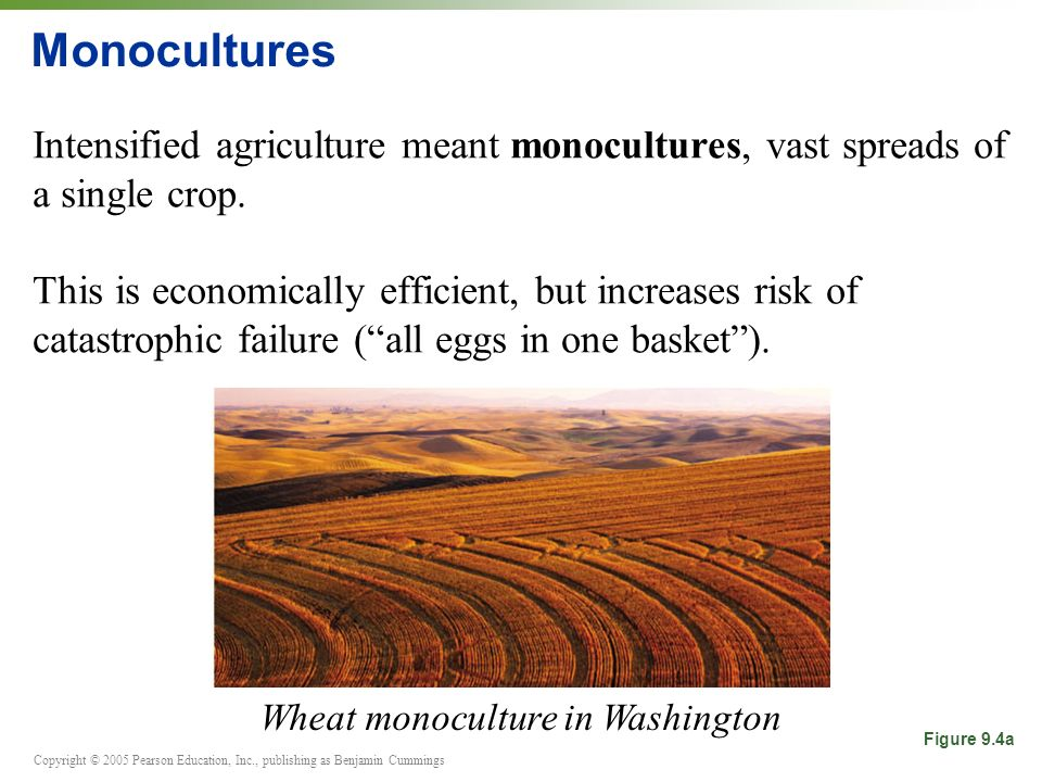Wheat monoculture in Washington