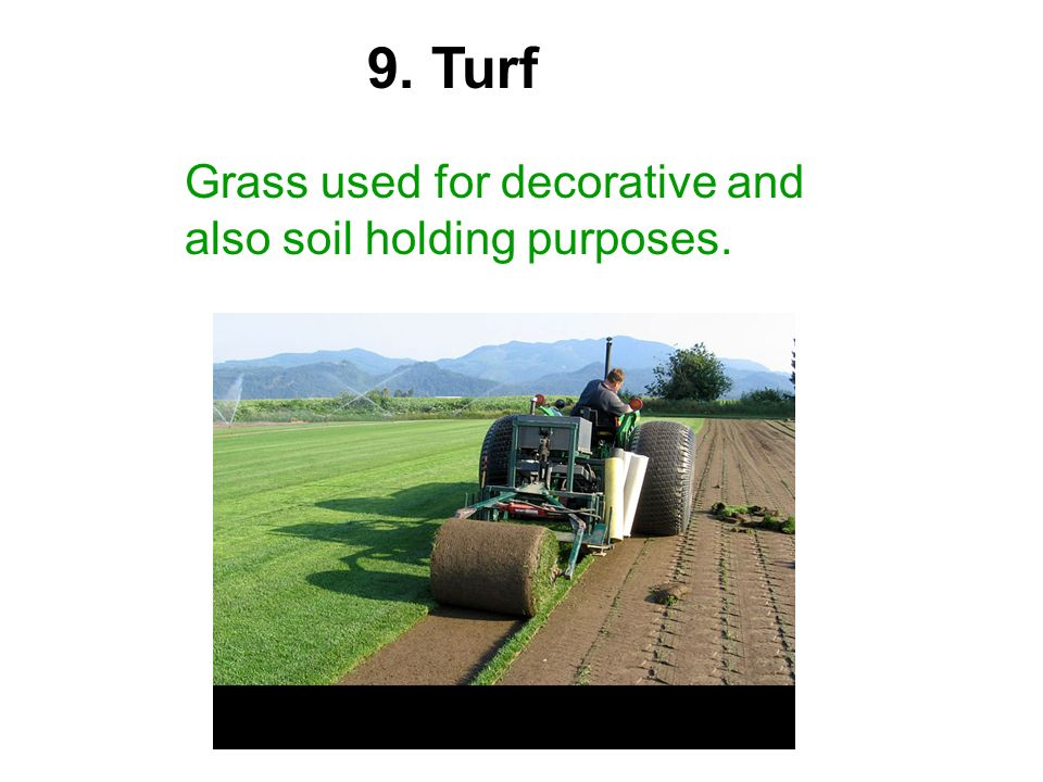 9. Turf Grass used for decorative and also soil holding purposes.