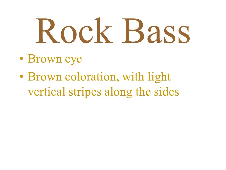 Rock Bass Brown eye Brown coloration, with light vertical stripes along the sides