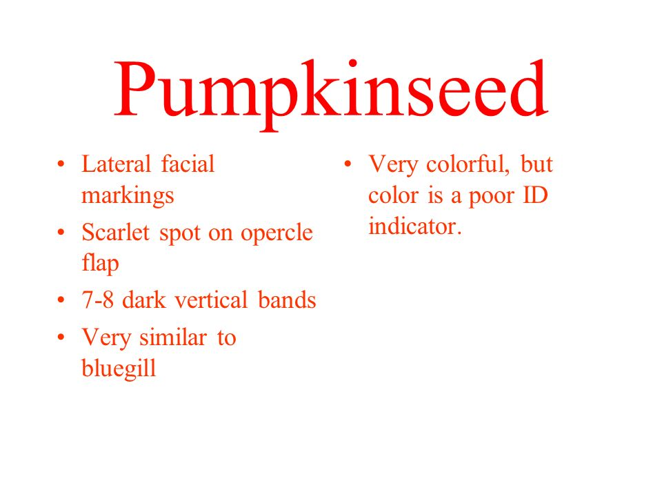 Pumpkinseed Lateral facial markings Scarlet spot on opercle flap