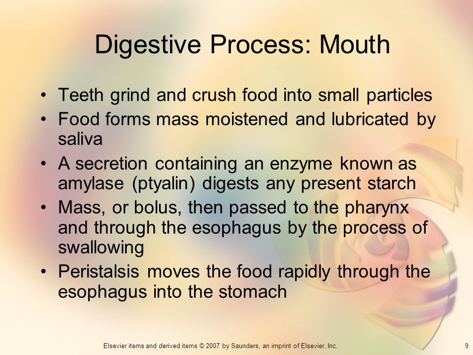 Digestive Process: Mouth