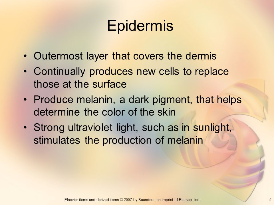 Epidermis Outermost layer that covers the dermis