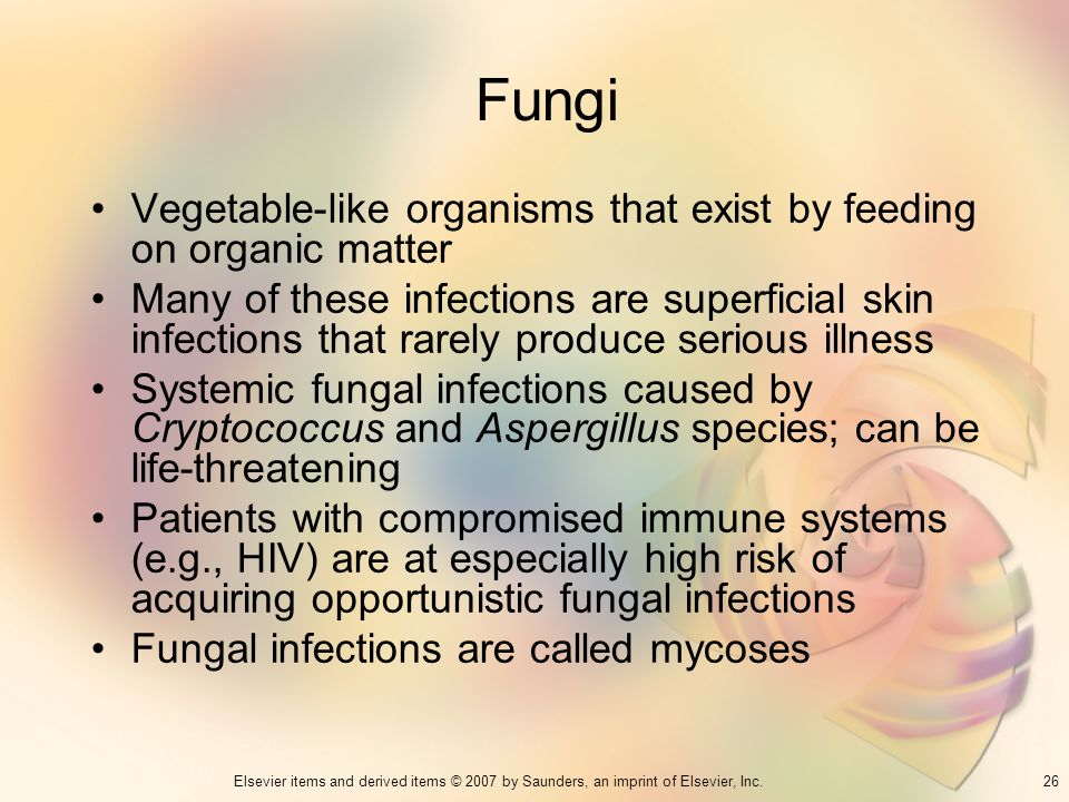 Fungi Vegetable-like organisms that exist by feeding on organic matter