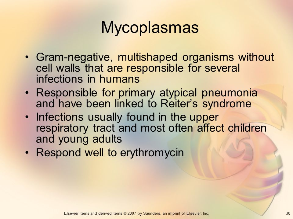 Mycoplasmas Gram-negative, multishaped organisms without cell walls that are responsible for several infections in humans.