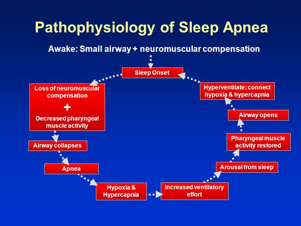 Pathophysiology of Sleep Apnea