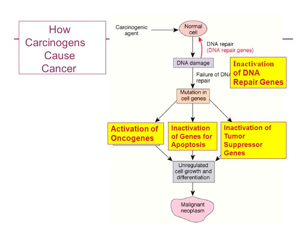 How Carcinogens Cause Cancer Inactivation of DNA Repair Genes