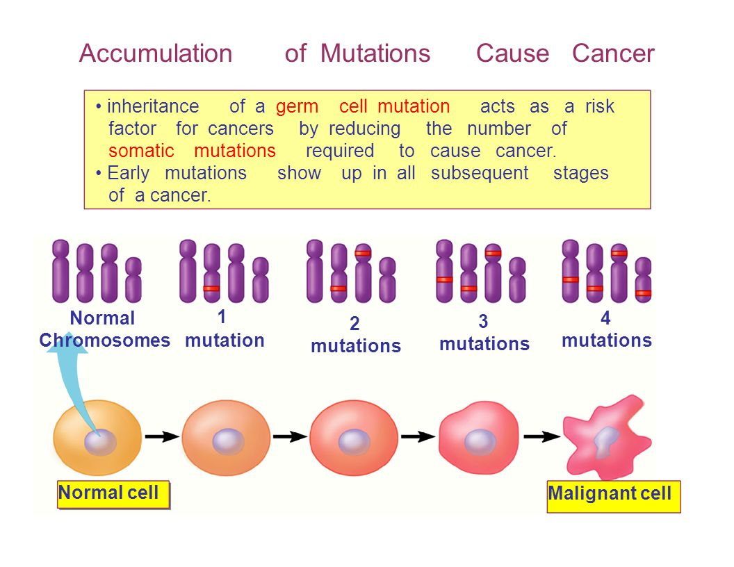 Accumulation of Mutations Cause Cancer