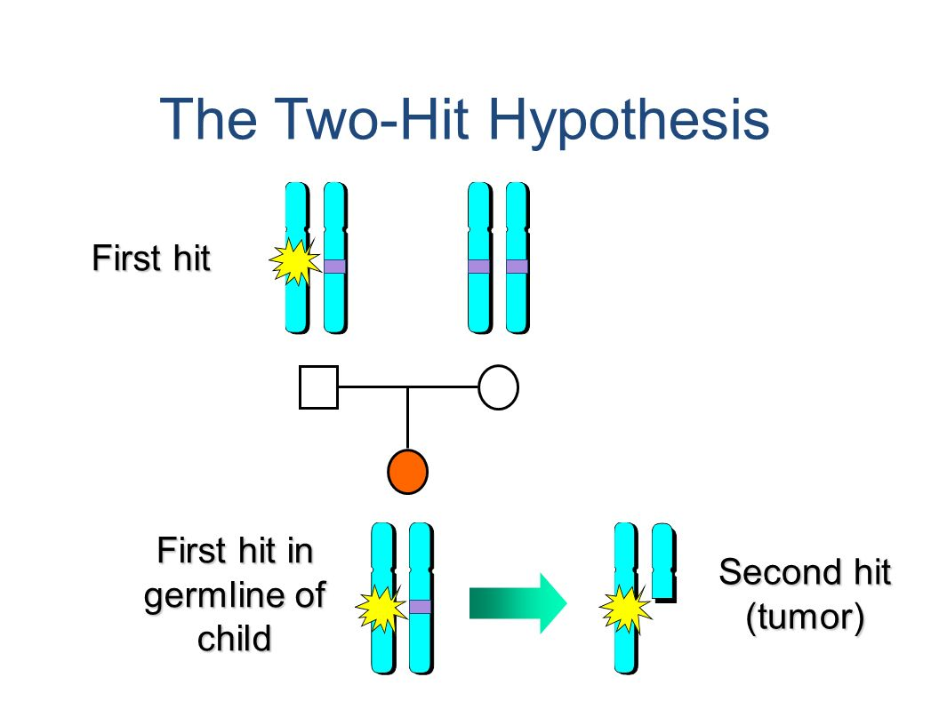 The Two Hit Hypothesis