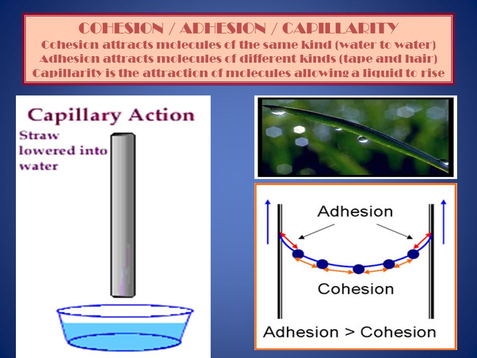 COHESION / ADHESION / CAPILLARITY Cohesion attracts molecules of the same kind (water to water) Adhesion attracts molecules of different kinds (tape and hair) Capillarity is the attraction of molecules allowing a liquid to rise