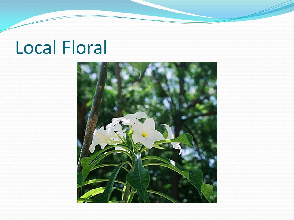 Local Floral