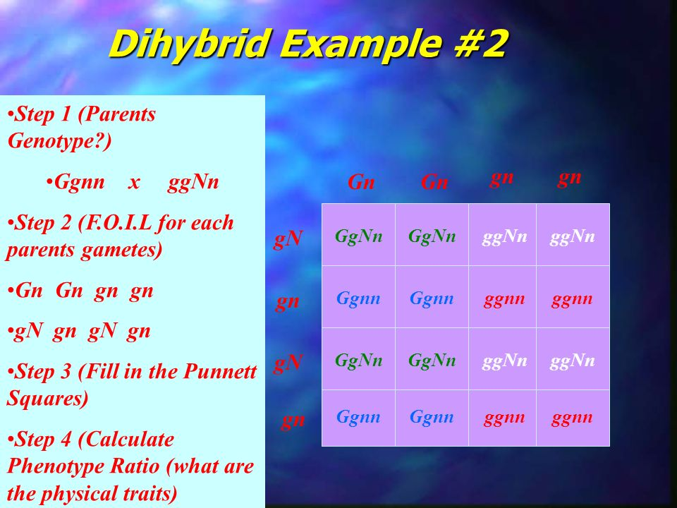 Dihybrid Example #2 Step 1 (Parents Genotype ) Ggnn x ggNn