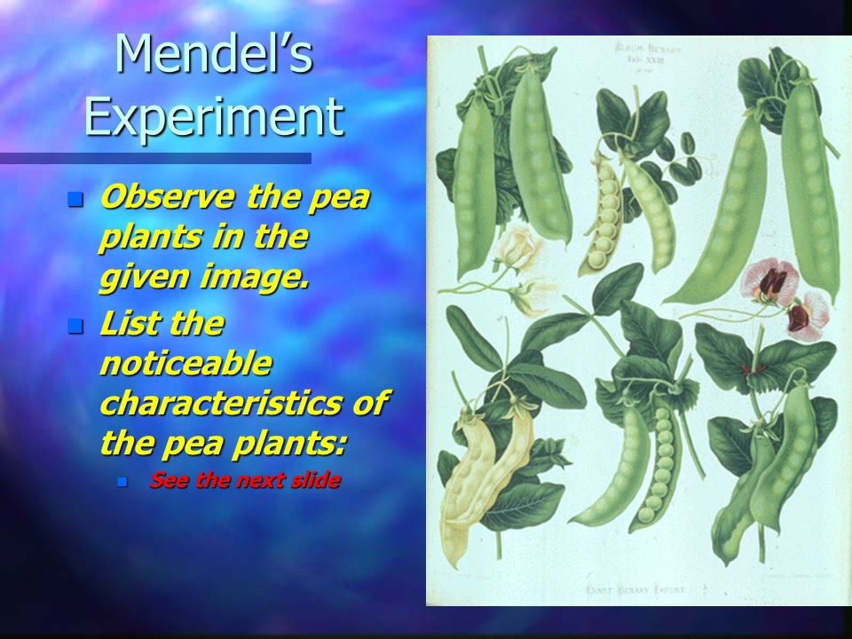 Mendel's Experiment Observe the pea plants in the given image.