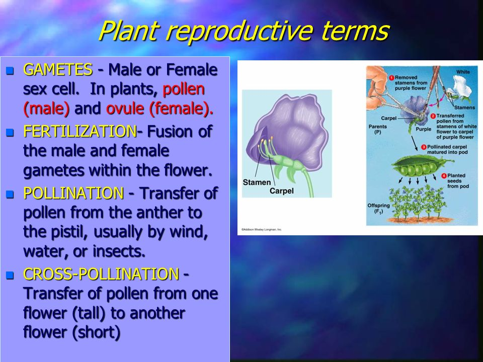 Plant reproductive terms