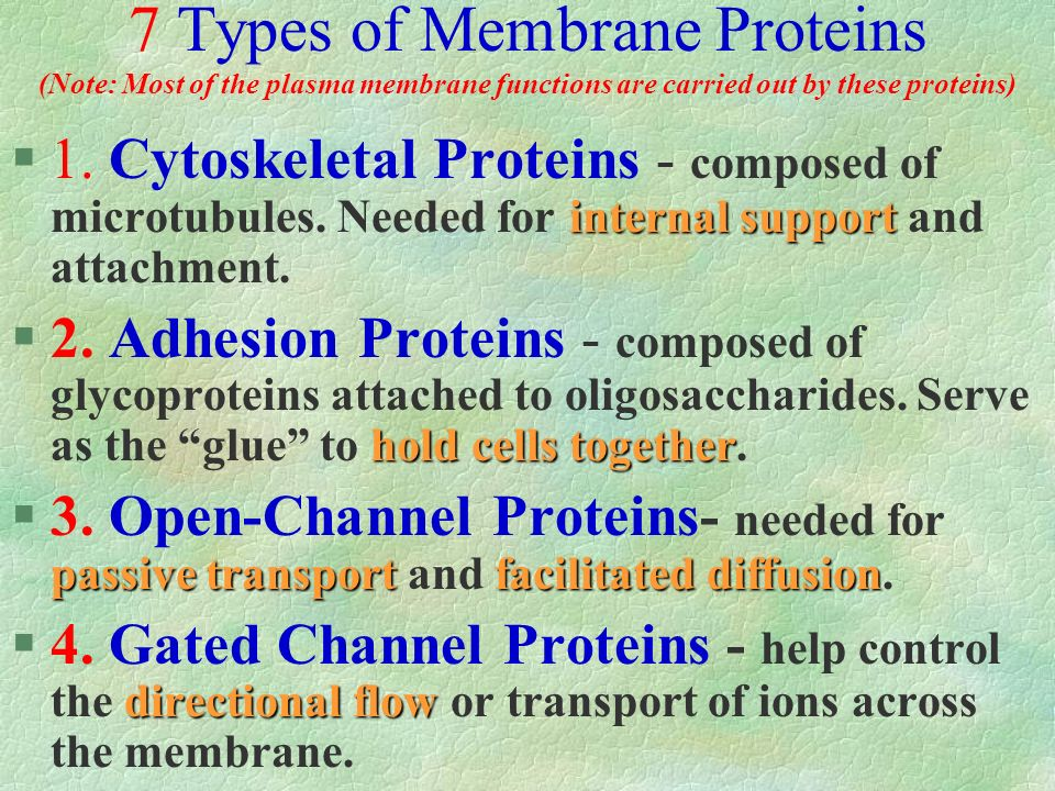 7 Types of Membrane Proteins (Note: Most of the plasma membrane functions are carried out by these proteins)