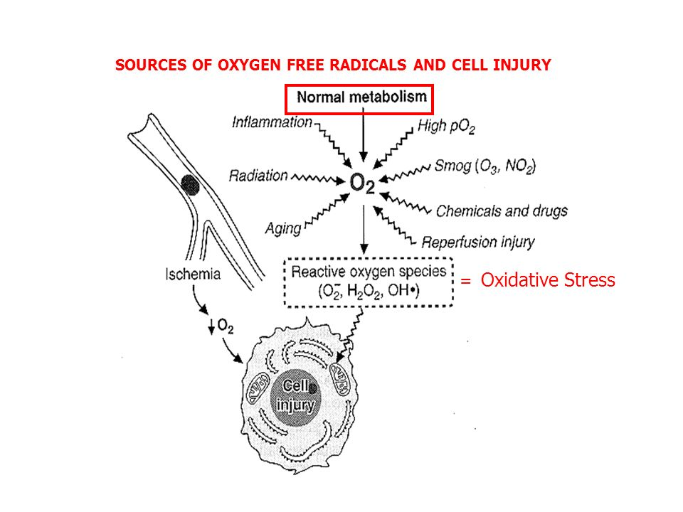 SOURCES OF OXYGEN FREE RADICALS AND CELL INJURY