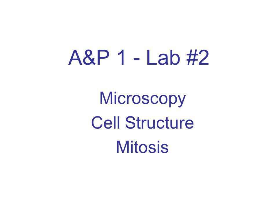 Microscopy Cell Structure Mitosis
