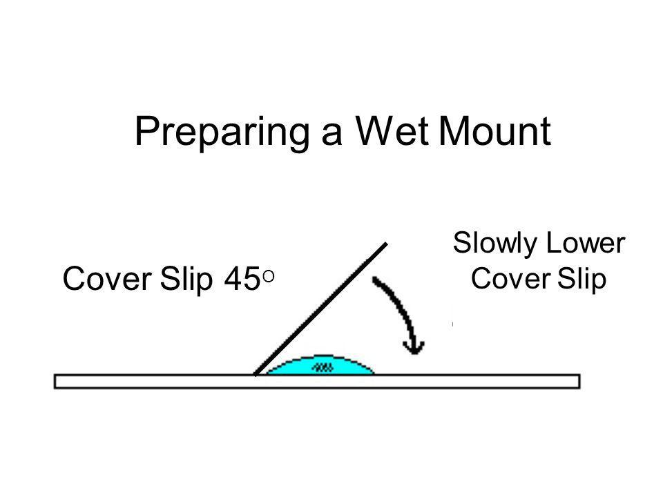 Preparing a Wet Mount Slowly Lower Cover Slip Cover Slip 45O