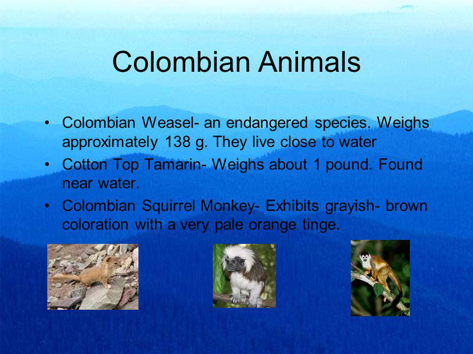 Colombian Animals Colombian Weasel- an endangered species. Weighs approximately 138 g. They live close to water.