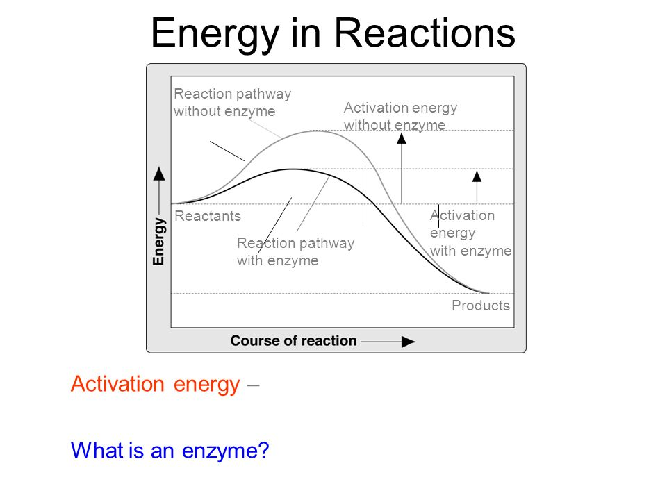 Energy in Reactions Reaction pathway. without enzyme. Activation energy. without enzyme. Reactants.