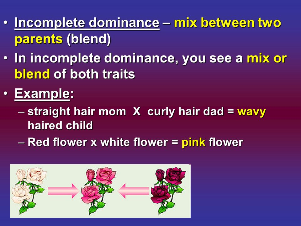 Incomplete dominance – mix between two parents (blend)