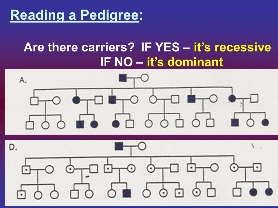 Reading a Pedigree: Are there carriers IF YES – it's recessive