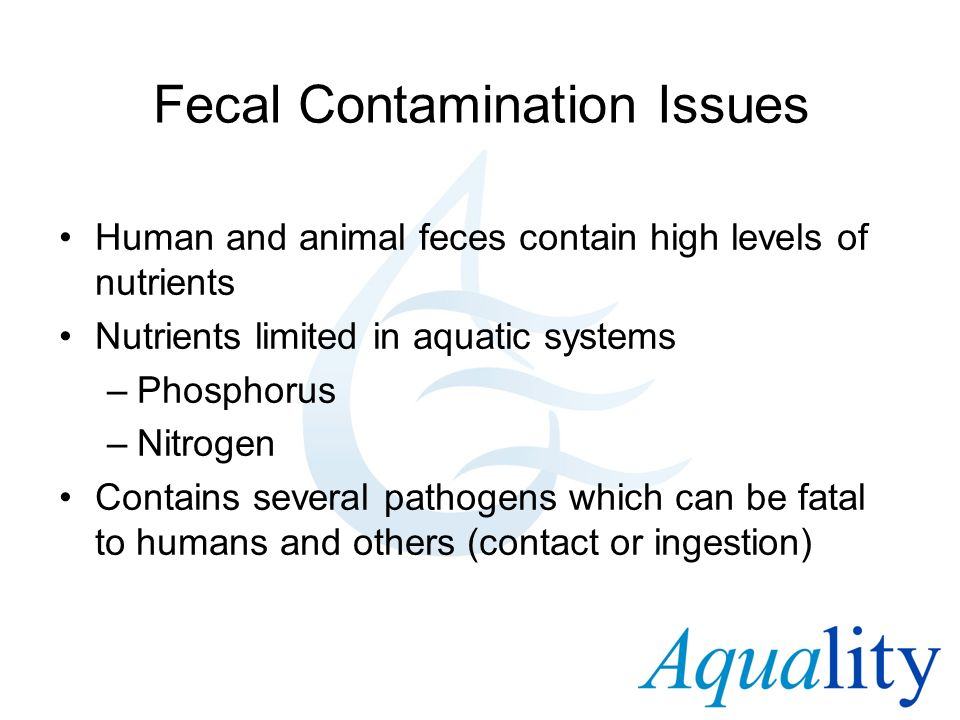 Fecal Contamination Issues