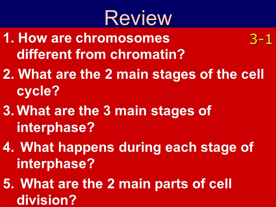 Review 1. How are chromosomes different from chromatin 3-1