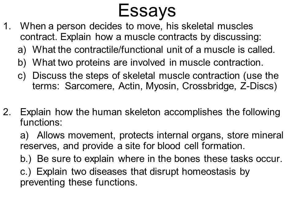 Essays When a person decides to move, his skeletal muscles contract. Explain how a muscle contracts by discussing: