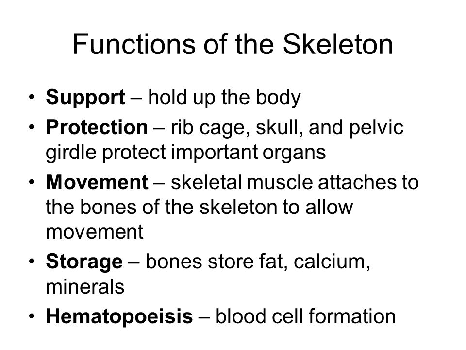 Human Body Systems Muscular System Skeletal System Circulatory