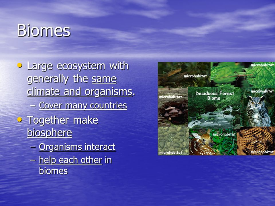 Biomes Large ecosystem with generally the same climate and organisms.