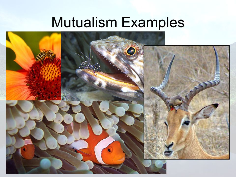 Mutualism Examples