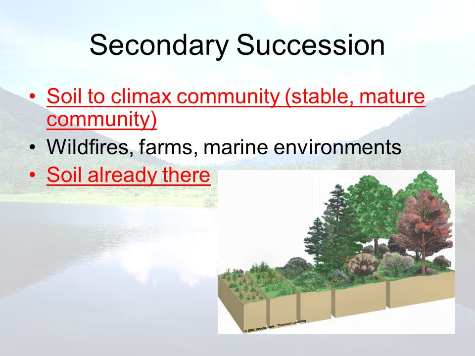 Secondary Succession Soil to climax community (stable, mature community) Wildfires, farms, marine environments.